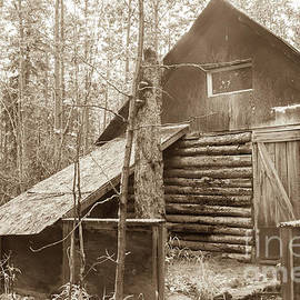Old Cabin by Robert Bales