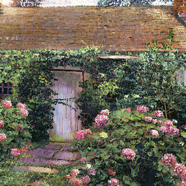Old Cottage Hydrangeas by David Lloyd Glover