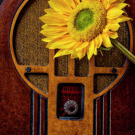 Old Radio And Sunflower by Garry Gay