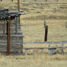 Colleen Cornelius - Old Shanty in Utah