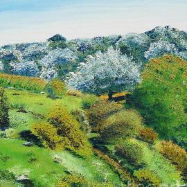 Olive Grove by Birgit Moldenhauer