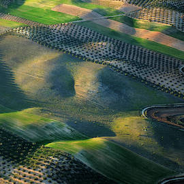 Olives fields from the air. At sunset by Guido Montanes Castillo