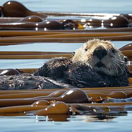 Randy Hall - Ollie The Otter