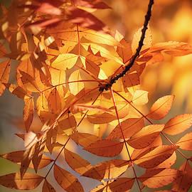 On A Golden Autumn Morning  by Saija Lehtonen