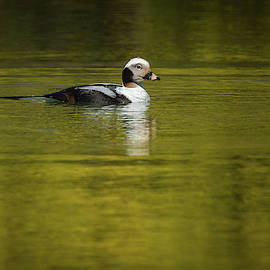 On a Golden Pond by Todd Henson