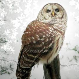 Patricia Keller - On This Snowy Day The Barred Owl Perches