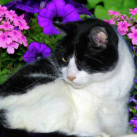 One Eye Cat With Garden Flowers by Constance Lowery
