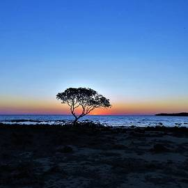 One Tree Sunset by Joan Stratton