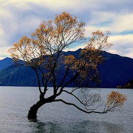 One Tree by Wendy McFarlane