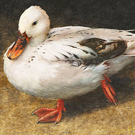 One White Duck Sketch by R christopher Vest