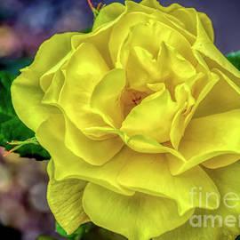 One Yellow Rose by Janice Pariza