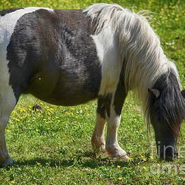 Only A Pony - Nur Ein Pony by Eva-Maria Di Bella