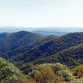 Orange and Yellow on the Blue Ridge by Patricia Caron