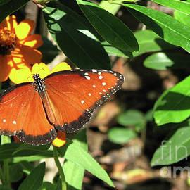 Orange Beauty by Julieanne Case