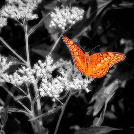 Orange Butterfly Color Select by Brian Wallace