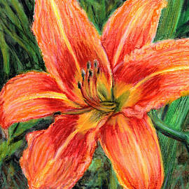 Orange Daylily by Shana Rowe Jackson