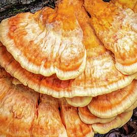 Orange Shelf Fungus by LeeAnn McLaneGoetz McLaneGoetzStudioLLCcom