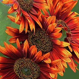 Orange Sunflower Group Portrait by Regina Geoghan
