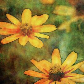 Orange Zinnias 3052 Idp_2 by Steven Ward