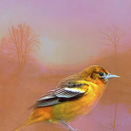 Oriole in Pink by Cynthia Alvado