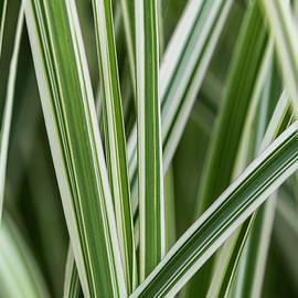 Ornamental Grass by Robert Potts