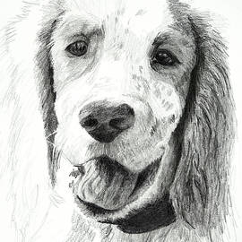 Our Dog Named Forest by Lynn Hansen