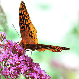 Overexposed Butterfly by Kathy McCabe