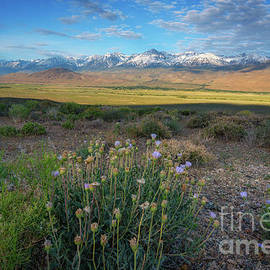 Owens Valley Overlook  by Michael Ver Sprill