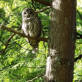 Owl at VanDusen Botanical Garden Vancouver by Eloise Schneider Mote