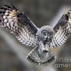 Ruth Housley - Owl Ready To Land