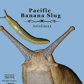 Pacific Banana Slug by Lisa Redfern