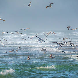 Pacific Seabirds 0988 by Kristina Rinell