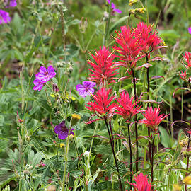 Paintbrush And Gentian by Michael Chatt