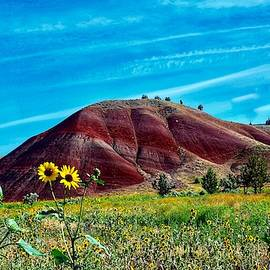 Painted Hill Sunflowers by Dana Hardy