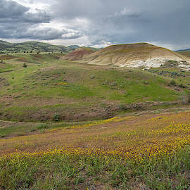 Painted Hills Bloom by Matthew Irvin