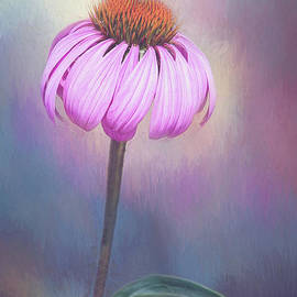 Painted Pink Coneflower by Sharon McConnell