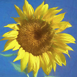 Painted Sunflower by Alison Frank