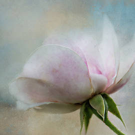 Pale Summer Rose by Terry Davis