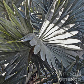 Palm Fronds by Ron Long