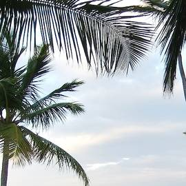Palm In The Sky 32 by Maria Faria Rodrigues
