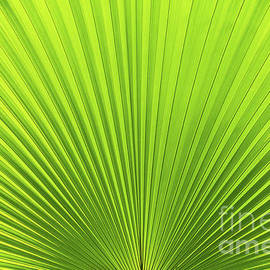 Palm Leaf Lines and Shadow by Ross Vaughan