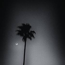Palm Moon  by Gary Richards