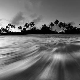 Palm Rush - BW by Sean Davey