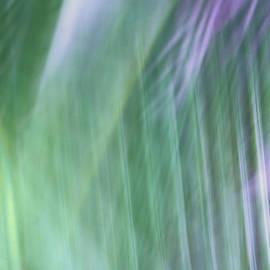 Palm Shadows by Marilyn Cornwell