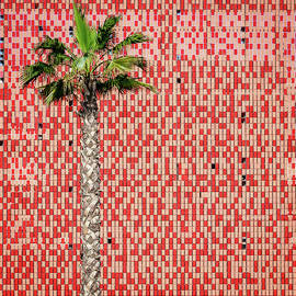 Palm tree and tiled wall by Alexey Stiop