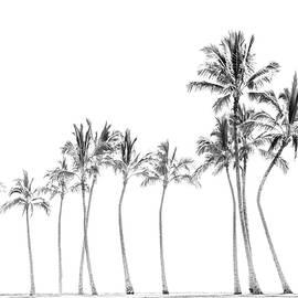 Palm Tree Horizon In Black And White by Ramona Murdock