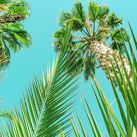 Palm Trees I by Anne Leven
