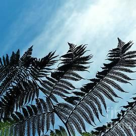Palms Flying High by Rosanne Licciardi
