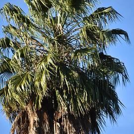 Palmyra Palm Trees by Marta Kazmierska
