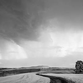Palouse Road and Field IR 9484 by Bob Neiman
